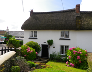 Thatched cottage near Budleigh Salterton